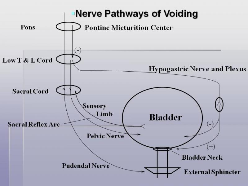 Voiding Pathways
